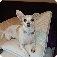 Adopt A Pet :: Revi - cleveland, OH