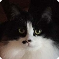 Adopt A Pet :: Bugsy - Tiburon, CA