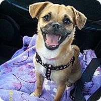 Adopt A Pet :: Pancake - Anaheim, CA
