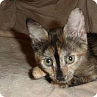 Adopt A Pet :: Sadie - Norwich, NY