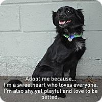 Adopt A Pet :: Trooper - Santa Monica, CA