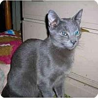 Adopt A Pet :: Brustus - Riverside, RI