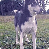 Adopt A Pet :: Save Kira from death - Sacramento, CA