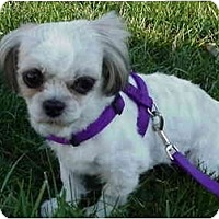 Adopt A Pet :: Buffy - Grove City, OH
