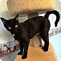 Adopt A Pet :: Molly - Florence, KY