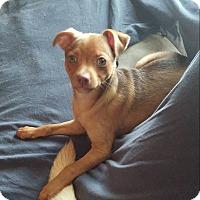 Adopt A Pet :: Pan - Ft. Collins, CO