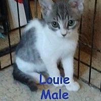 Adopt A Pet :: Louie - Visalia, CA
