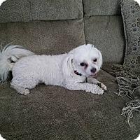 Adopt A Pet :: Lucky - La Verne, CA