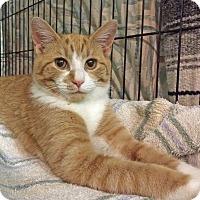 Adopt A Pet :: Atlas - East Brunswick, NJ