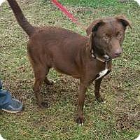 Adopt A Pet :: Quinn - Sparta, NJ