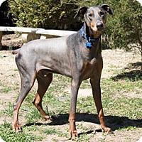 Adopt A Pet :: ALDO - Greensboro, NC