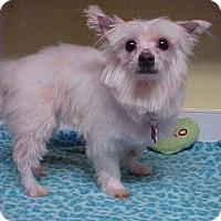 Adopt A Pet :: Murphy Watson - 8 lbs - Dahlgren, VA