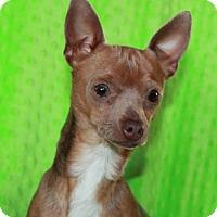 Adopt A Pet :: Gus - Phelan, CA