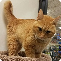 Adopt A Pet :: Tigger - Colonial Heights, VA
