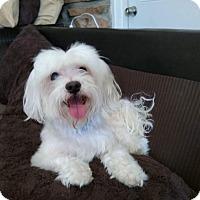 Adopt A Pet :: Westminister - Las Vegas, NV
