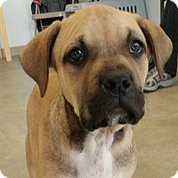 Adopt A Pet :: Connor - Newcastle, OK
