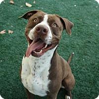 Adopt A Pet :: Bronson - San Diego, CA