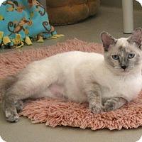 Adopt A Pet :: Opal - Redwood Falls, MN