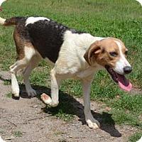 Adopt A Pet :: Everest - Ridgeland, SC