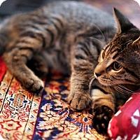 Adopt A Pet :: Margaret - N. Billerica, MA