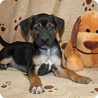 Adopt A Pet :: Hector - Hagerstown, MD