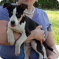Adopt A Pet :: Noah (10 lb) Video - Burlington, VT
