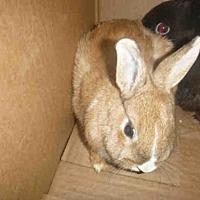 Adopt A Pet :: A1692819 - Los Angeles, CA