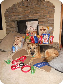 German Shepherd Dog Dog for adoption in Greeneville, Tennessee - Princess