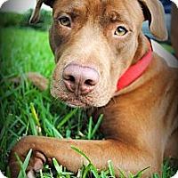 Adopt A Pet :: Tribute - Orlando, FL