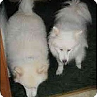 Adopt A Pet :: KC - Madison, WI