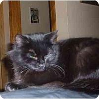 Adopt A Pet :: Raven - Bedford, MA