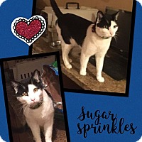 Adopt A Pet :: Sugar Sprinkles - Scottsdale, AZ