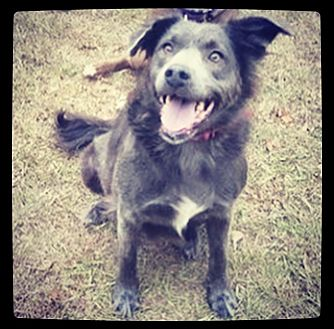 Border Collie Mix Dog for adoption in Grand Bay, Alabama - Missy