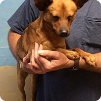 Adopt A Pet :: DASH - Metairie, LA