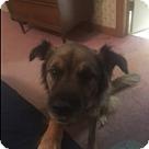 Adopt A Pet :: CHARLIE-2