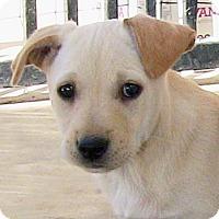 Adopt A Pet :: Sugar Bear - Poway, CA