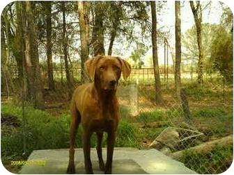 Labrador Retriever Mix Dog for adoption in Emory, Texas - Katie
