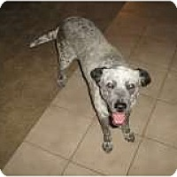 Adopt A Pet :: Evangalin- Only $45 adoption! - Litchfield Park, AZ