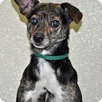 Adopt A Pet :: Kelly - Port Washington, NY