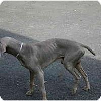 Adopt A Pet :: Guy - Attica, NY