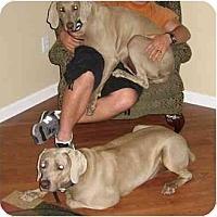 Adopt A Pet :: Delco & Goodwrench - Eustis, FL