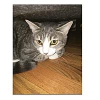 Adopt A Pet :: Clover - Ortonville, MI