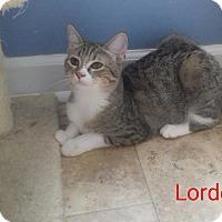 Adopt A Pet :: Lorde - McDonough, GA