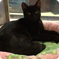 Adopt A Pet :: Edward - Byron Center, MI