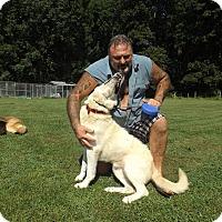 Adopt A Pet :: Rommel - Quincy, IN
