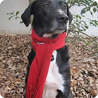 Adopt A Pet :: Daisy Duke - Silver Spring, MD