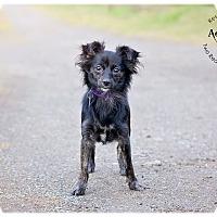 Adopt A Pet :: Queenie - Seattle c/o Kingston 98346/ Washington State, WA