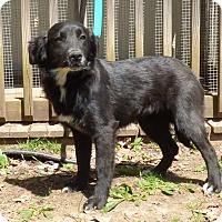 Adopt A Pet :: Tillie - Hartford, CT