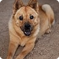 Adopt A Pet :: Lady - Corona, CA