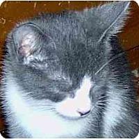Adopt A Pet :: Kitten1 - Jacksonville, FL
